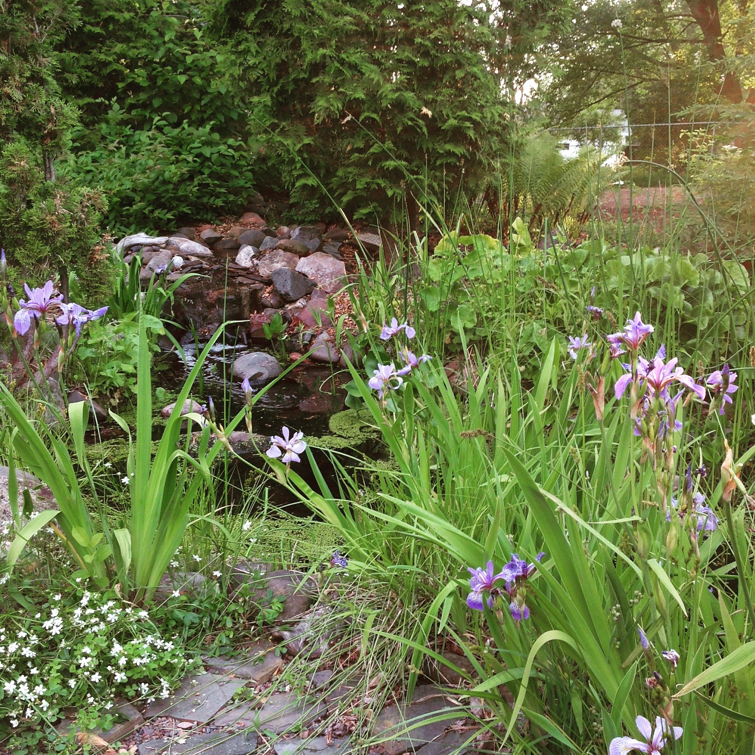 dreamin u0027 of rain gardens backyard ponds and native landscaping
